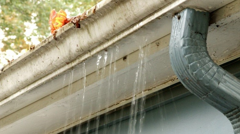 Mold Growth in Your Gutters